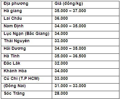 gia heo hom nay 5/2: gan tet, lo mo xuyen a hoat dong lai, gia moi nhat dat 37.000 d/kg hinh anh 3