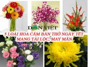 Ban doc - 5 loai hoa cam ban tho dip Tet hut tai loc, may man trong nam moi