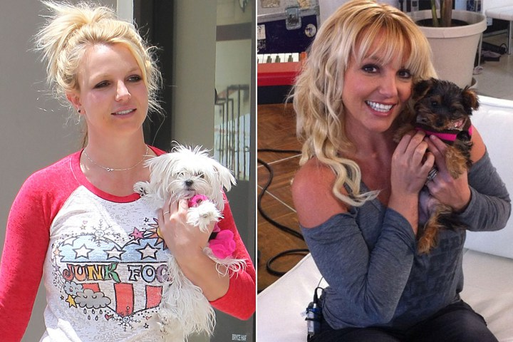 britney spears chi hon nua ti cho cho cung hinh anh 2