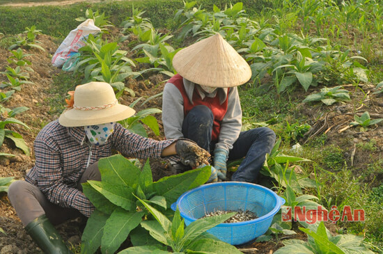 nghi loc lam giau voi hanh tam, thuoc lao, lac han quoc hinh anh 1