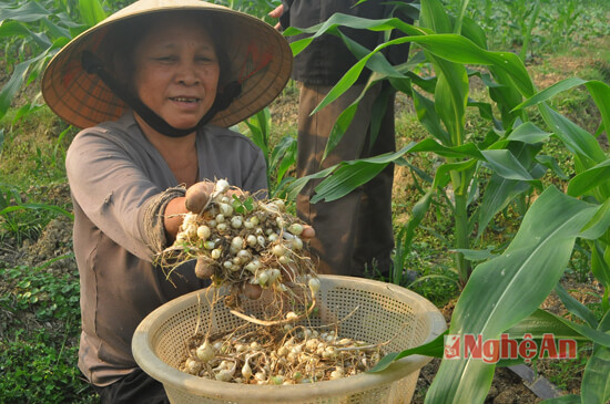 nghi loc lam giau voi hanh tam, thuoc lao, lac han quoc hinh anh 2
