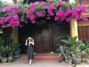 Du lich - Pho co Hoi An dep tho mong trong mua hoa giay khoe sac