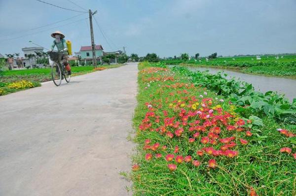 """""""me met"""" con duong hoa ruc ro dep nhu tien canh o lang que nam dinh hinh anh 9"""