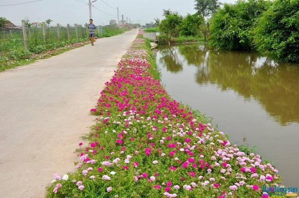"""""""me met"""" con duong hoa ruc ro dep nhu tien canh o lang que nam dinh hinh anh 11"""