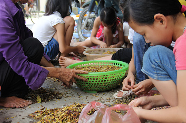 nghe la: nhat canh con trung cung co tien hinh anh 2