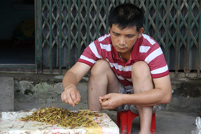 nghe la: nhat canh con trung cung co tien hinh anh 4