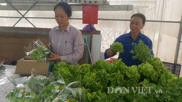 nam dinh: bo pho ve que trong rau cong nghe cao lai hon 1 ty/nam. hinh anh 4