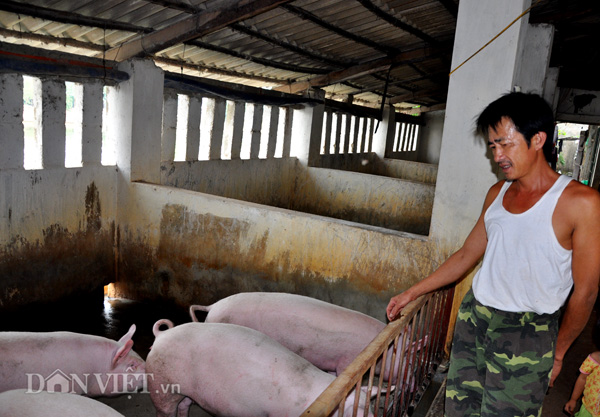 gia lon hom nay 28.7: dung hi vong trung quoc, duoc gia 40.000 d/kg ban ngay hinh anh 3