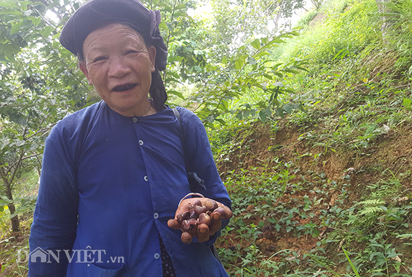 nhat hat de thue, cong viec lam thich me, con hai ra tien tram/ngay hinh anh 5
