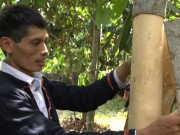 Media - Clip: Trong cay lay vo cay, cham de ma thu tien ty moi nam