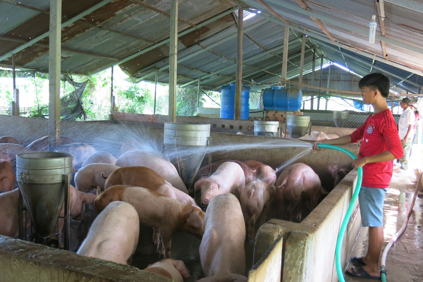 gia heo hoi hom nay 19/9: bac tang gia, nam co noi dat 48.000d/kg? hinh anh 1