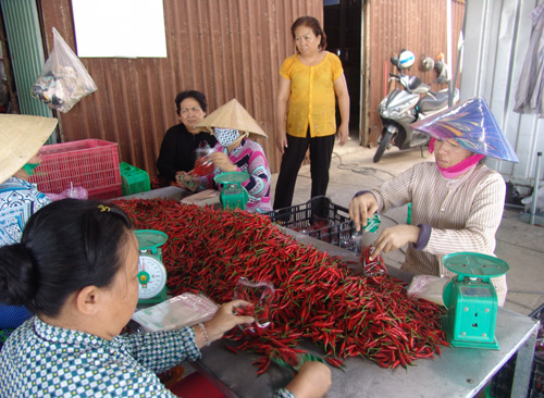 tp.ho chi minh: htx phat trien ca luong va chat hinh anh 1