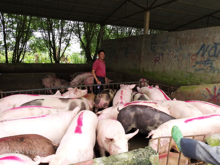 gia heo hoi hom nay 8/10: lap dinh 61.000 d/kg, lai san lon rao riet hinh anh 1